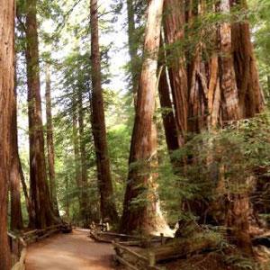 Muir Woods Sausalito Tour