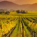 Napa Wine Country Tours
