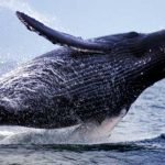 San Francisco Whale Watching Tours