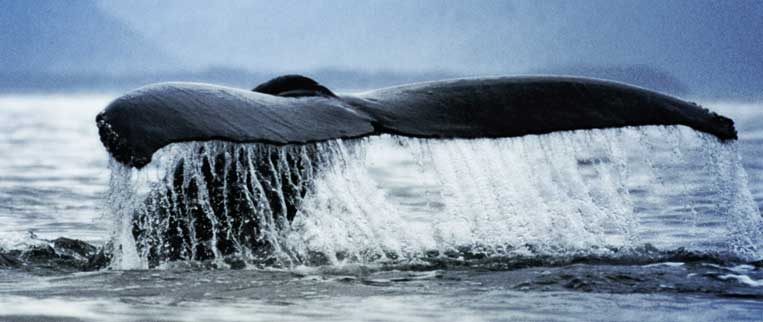 San Francicso Whale Watching Tours